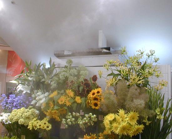 foto Fseries met bloemen