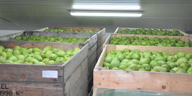Ultrasone luchtbevochtiging van Aire Fresh Systems voor de opslag van peren